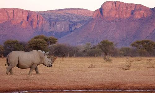 ecotourisme-afrique-du-sud